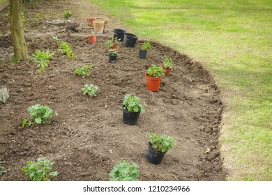 Planning a newly prepared flower bed with plants placed in pots
