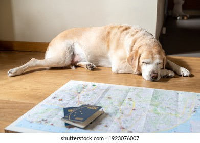 Planning a trip with your dog. The dog lies on the floor near the map.