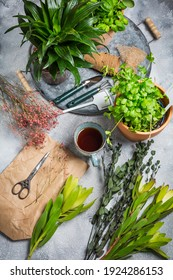 Planning your herb garden, patio and replanting of herbs and indoor  plants. Cup od tea with garden tools and flower pots.