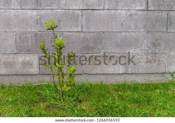 Plant against concrete brick wall