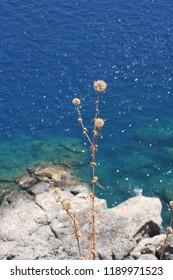 Plant against the Medierranean sea.