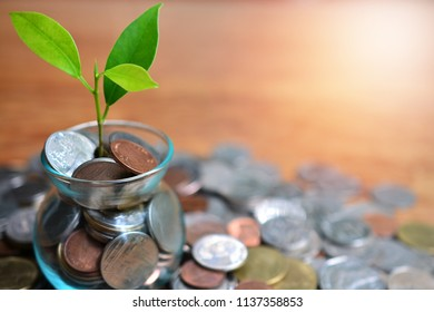 plant between coins - saving concept