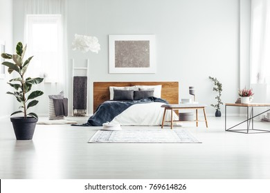 Plant in black pot in spacious white bedroom interior with bed with wooden bedhead against a wall with silver painting