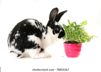 Plant and black and white rabbit in the office - natural corner