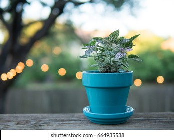 Plant in blue ceramic pot in back yard with string lights in the background,