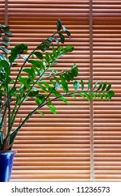 Plant in blue pot front of wooden blinds closed downwards