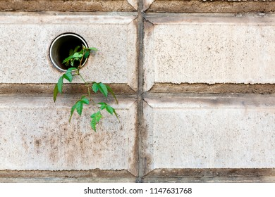 Plant in building, life against all odds, synergy, contrast, harmony