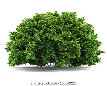 Plant bush isolated.