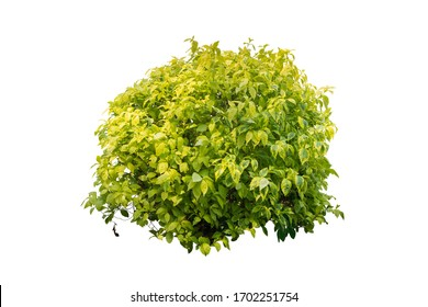 plant bush tree isolated include clipping path on white background