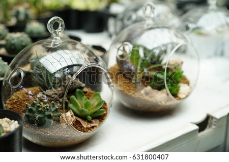 Photo De Stock De Plant Cactus Round Glass Jar Terrarium Modifier