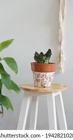 a plant called sansevieria. Sansevieria at painted pot above the stool for decoration. Making home beautiful