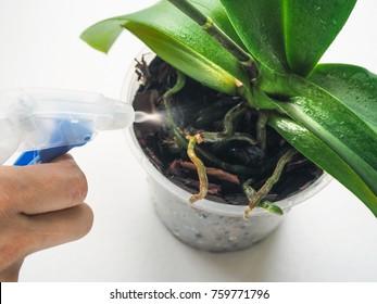Plant care orchids