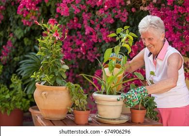 plant care, senior woman watering pot  plants