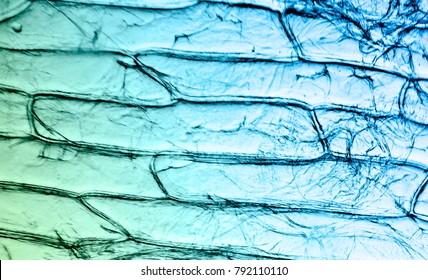 Plant cell under microscop