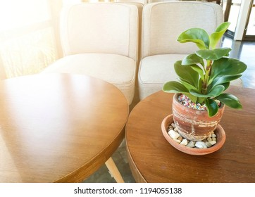 Plant in clay pot on wood table with warm light.