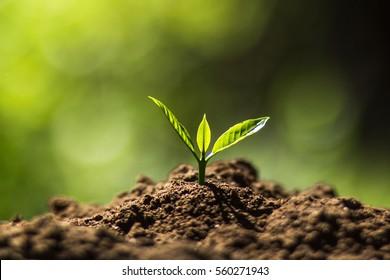 normal and abnormal seedlings