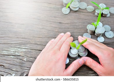 plant coins to profit concept investment and finance mutual fund
