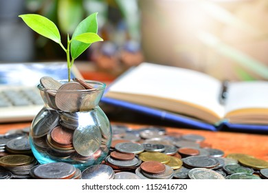plant coins saving growth up to high profit interest for concept investment mutual fund finance and pension retirement