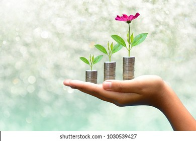 plant coins saving growth up to profit interest on hand for concept investment mutual fund finance and business