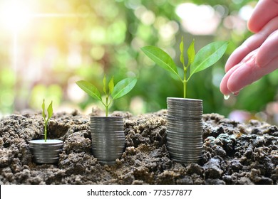 plant coins saving growth up to profit for concept investment fund finance and business