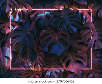 Plant with colorful neon light frame