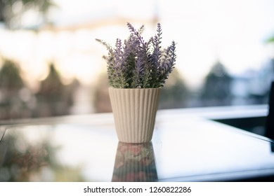 plant in cup at home