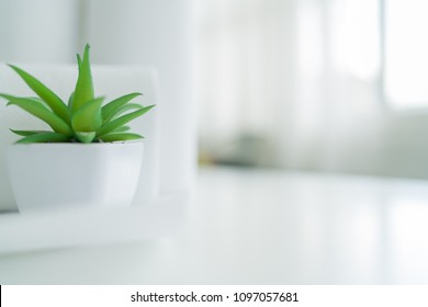 plant decorate with blured cotton towels in background