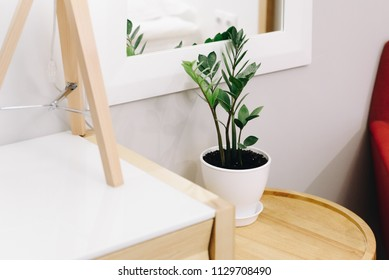 Plant as a decoration in interior design. Design of a living room or a hotel. Bright red armchair in the corner. ZZ plant or zamioculcas, low maintenance and easy to care for house plant