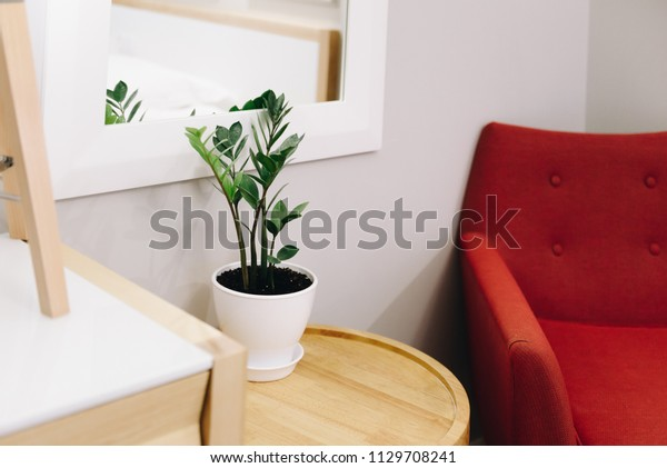 Plant Decoration Interior Design Design Living Stock Photo (Edit ...