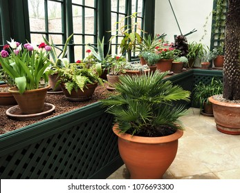 Plant display in a conservatory