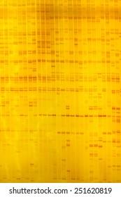 Plant DNA fingerprint on acrylamine gel electrophoresis result