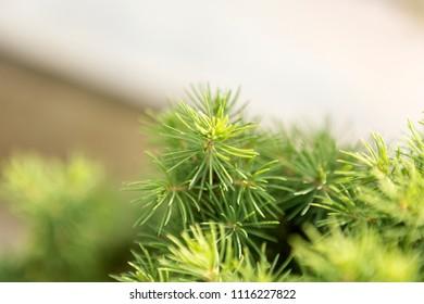 Plant domestic pet 2