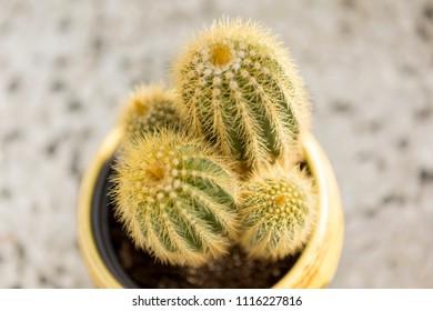 Plant domestic pet 3