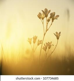 Plant at dusk