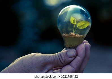 plant and environment protection concept, hand holding lamp bulb with sapling growing inside