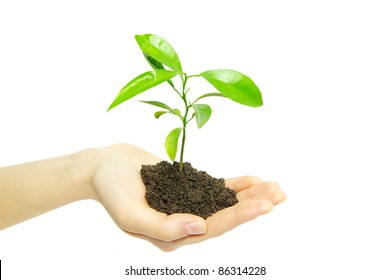 plant in female hands isolated on white background