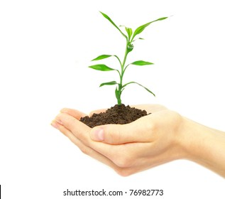 plant in female hands on white background