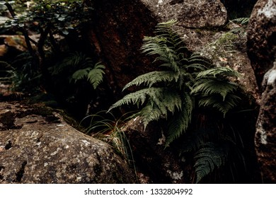 Plant fern growing out of a Rock