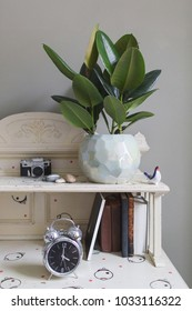 plant ficus rubber in a beautiful designer ceramic pot on a wooden table in the interior