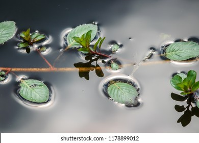 Plant floating on tranquil waters nature photography