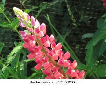 plant flower floriculture