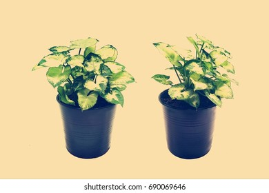 The plant in flowerpot on vintage background
