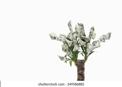 Plant with flowers made from dollar notes against white background