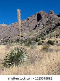 A plant in front of the Organ Mountains