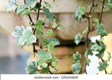 plant in the garden