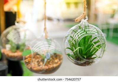 plant and garden in bottle , terrarium