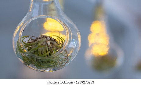 plant in glass