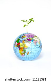 plant from a globe