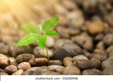 plant glowing by process of photosynthesis between green chlorophyll and sunlight as nature bio ecology. startup new business