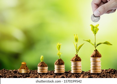 Plant glowing on coins stacking on soil and greenery background.Dividend of Banking Deposit and stock investment concept.
